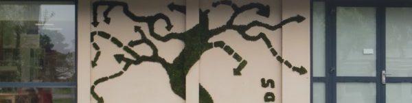 arbre ubinam1